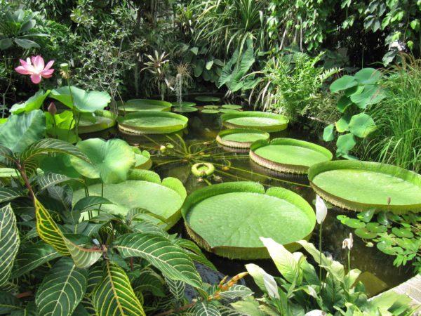 Inside the tropical greenhouses of the Parc du Moulin à Tan